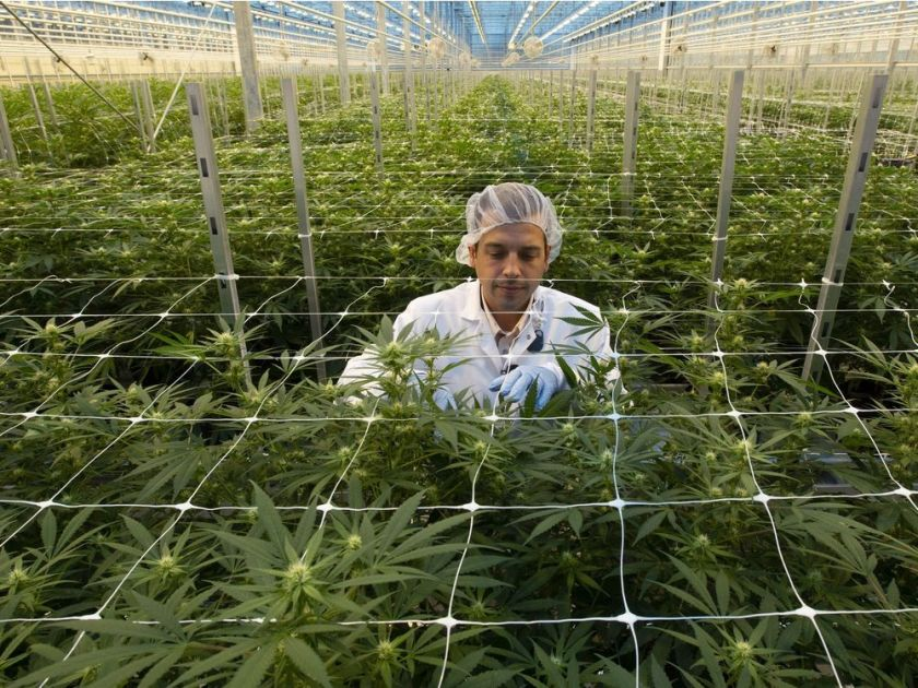 Miron: Let cannabis consumer brands compete, Canada